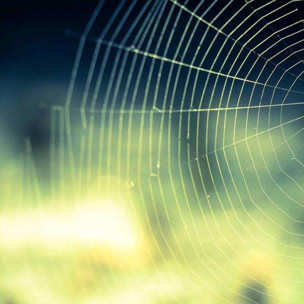 Get rid of spiders with Arete Pest Control